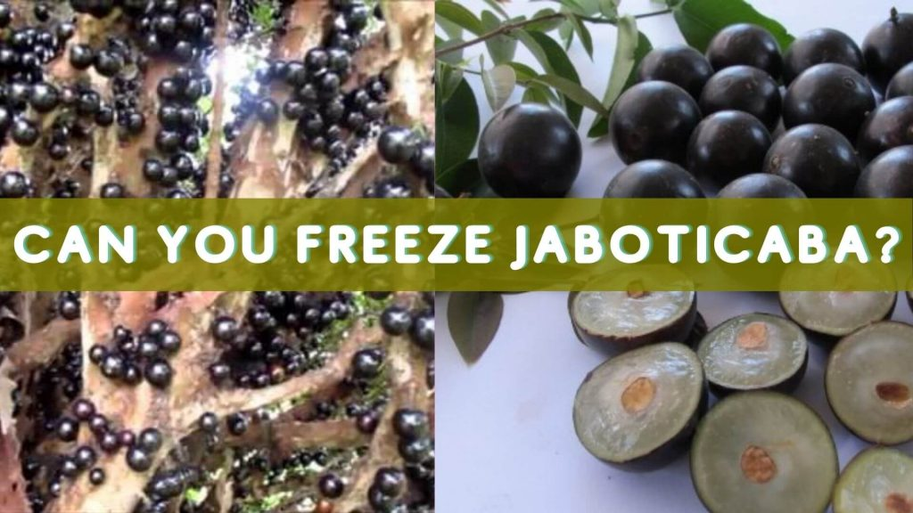 Yes you can freeze Jaboticaba.