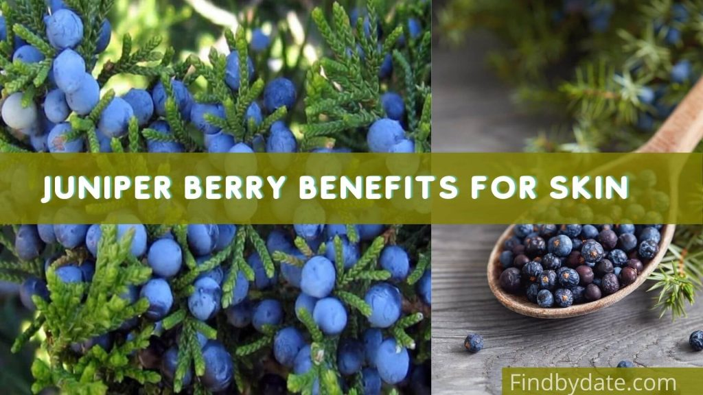 juniper berry health benefits
