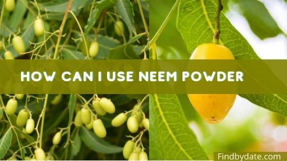 What is Neem fruit called